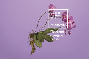 Pantone revela el Color del Año 2014: PANTONE Orquídea Radiante 18-3224
